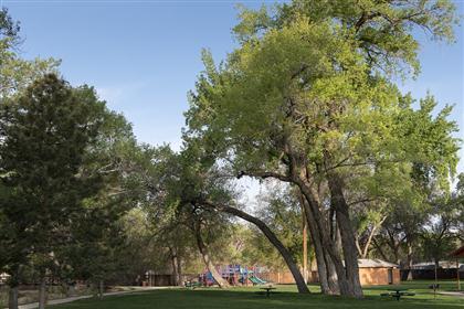 Rotary Park Trees